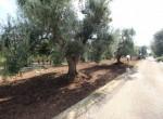 Te koop - terrein met trullo in Carovigno, Puglia 2