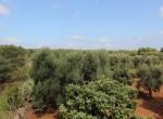Te koop - terrein met trullo in Carovigno, Puglia 20
