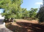 Te koop - terrein met trullo in Carovigno, Puglia 3