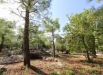 Te koop - terrein met trullo in Carovigno, Puglia 7