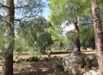 Te koop - terrein met trullo in Carovigno, Puglia 8