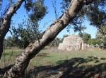 trullo olijfgaard te koop in Puglia, Carovigno - Italie 1