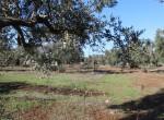 trullo olijfgaard te koop in Puglia, Carovigno - Italie 11