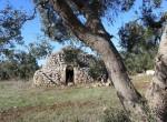 trullo olijfgaard te koop in Puglia, Carovigno - Italie 3
