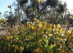 trullo olijfgaard te koop in Puglia, Carovigno - Italie 7