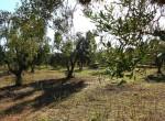 trullo olijfgaard te koop in Puglia, Carovigno - Italie 8