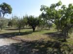Vrijstaand huis - villa te koop Recanati Le Marche Italie 4
