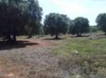 bouwgrond in carovigno puglia te koop 4