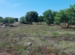 bouwgrond in carovigno puglia te koop 5
