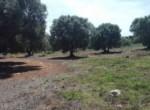 bouwgrond in carovigno puglia te koop 6