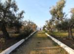 trullo lamie te koop in Puglia - Francavilla Fontana 2