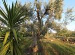 trullo lamie te koop in Puglia - Francavilla Fontana 4