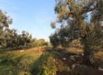 trullo lamie te koop in Puglia - Francavilla Fontana 6