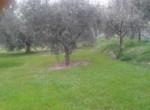 Historische villa in Colli del Tronto Le Marche te koop 40