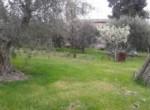 Historische villa in Colli del Tronto Le Marche te koop 5