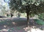 Passignano sul Trasimeno - villa in Umbrie te koop 13