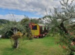Agriturismo in Toscane te koop - Massarosa 10