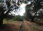 Trullo tussen Ostuni en Ceglie Messapica te koop - Puglia 12