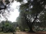 Trullo tussen Ostuni en Ceglie Messapica te koop - Puglia 13