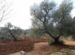 Trullo tussen Ostuni en Ceglie Messapica te koop - Puglia 14