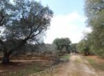 Trullo tussen Ostuni en Ceglie Messapica te koop - Puglia 18