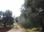 Trullo tussen Ostuni en Ceglie Messapica te koop - Puglia 20