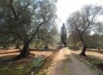 Trullo tussen Ostuni en Ceglie Messapica te koop - Puglia 8