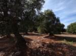 bouwgrond met zeezicht in Puglia te koop - Carovigno 10