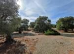 bouwgrond met zeezicht in Puglia te koop - Carovigno 12