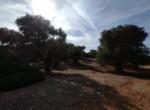 bouwgrond met zeezicht in Puglia te koop - Carovigno 13