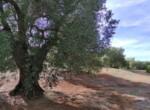 bouwgrond met zeezicht in Puglia te koop - Carovigno 14