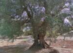 bouwgrond met zeezicht in Puglia te koop - Carovigno 15