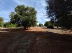 bouwgrond met zeezicht in Puglia te koop - Carovigno 16