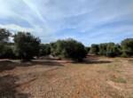 bouwgrond met zeezicht in Puglia te koop - Carovigno 17