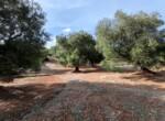 bouwgrond met zeezicht in Puglia te koop - Carovigno 18