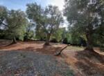 bouwgrond met zeezicht in Puglia te koop - Carovigno 19