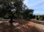 bouwgrond met zeezicht in Puglia te koop - Carovigno 2