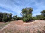 bouwgrond met zeezicht in Puglia te koop - Carovigno 20