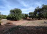 bouwgrond met zeezicht in Puglia te koop - Carovigno 21