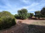 bouwgrond met zeezicht in Puglia te koop - Carovigno 3