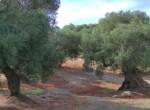 bouwgrond met zeezicht in Puglia te koop - Carovigno 6