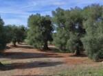 bouwgrond met zeezicht in Puglia te koop - Carovigno 7