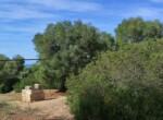 bouwgrond met zeezicht in Puglia te koop - Carovigno 8