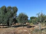 bouwgrond zeezicht puglia carovigno 20