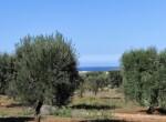 bouwgrond zeezicht puglia carovigno 4