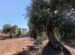 bouwgrond zeezicht puglia carovigno 8