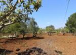 Ceglie Messapica - Karakteristiek trullo complex in Puglia 10