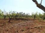 Ceglie Messapica - Karakteristiek trullo complex in Puglia 12