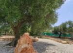 Ostuni Puglia - Villa te koop 21