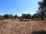 Te renoveren boerderij te koop in Sicilie 2
